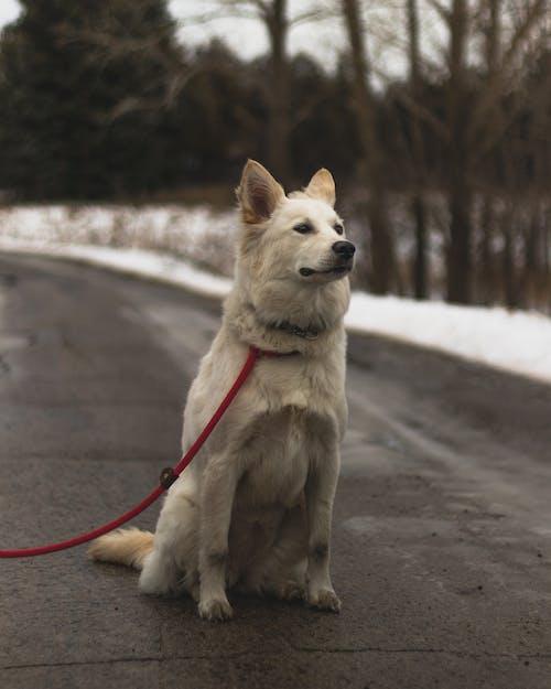 Foto profissional grátis de aventura, cachorro, filhote, rua
