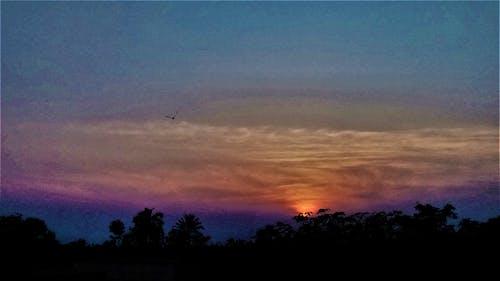 Imagine de stoc gratuită din arbori, cer de seară, Cer întunecat, păsările care zboară
