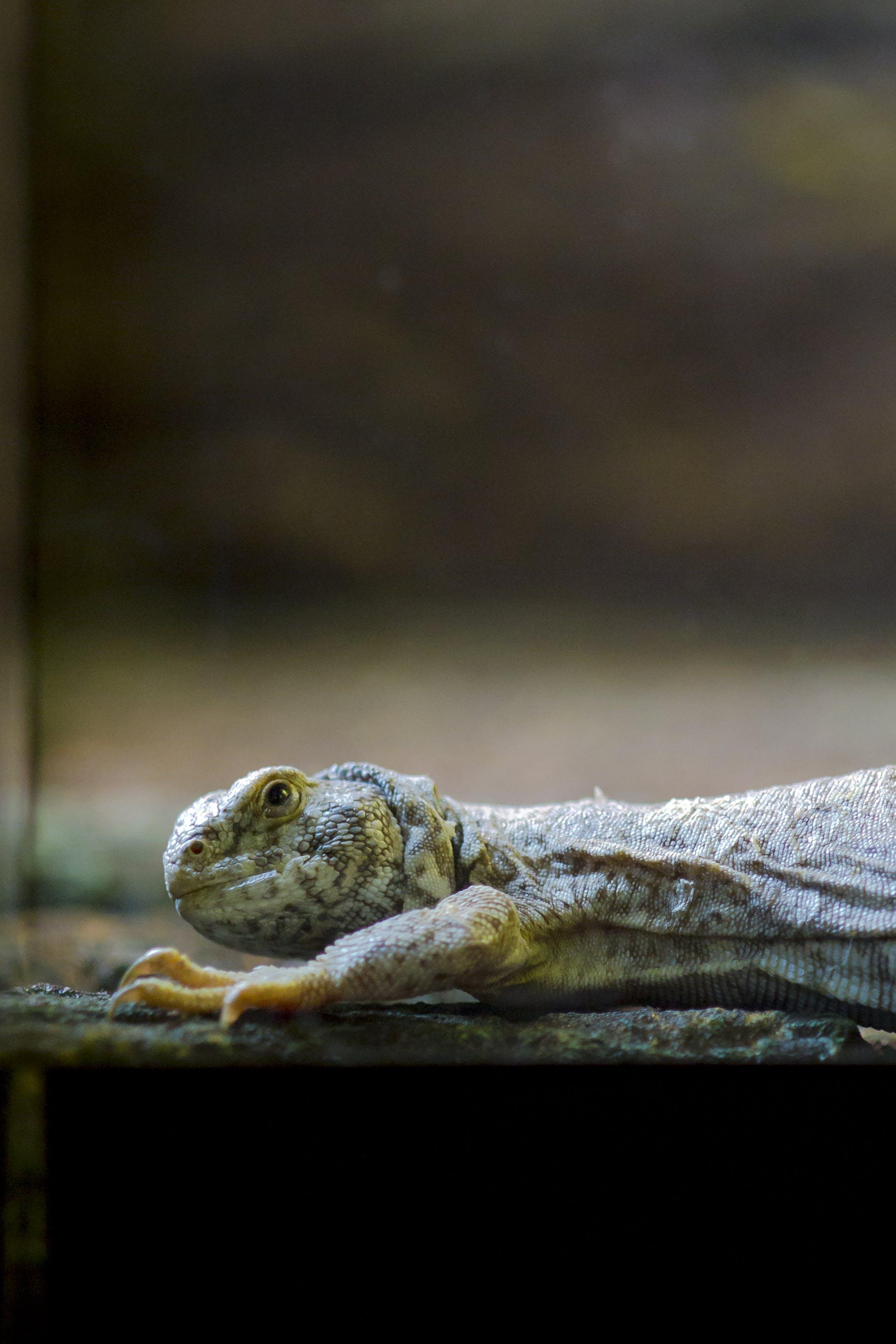 Close-up Photo Of Lizard