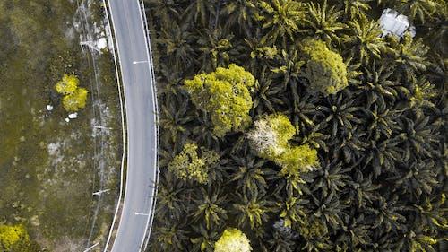 Gratis lagerfoto af fra oven, fugleperspektiv, luftfoto, palmer