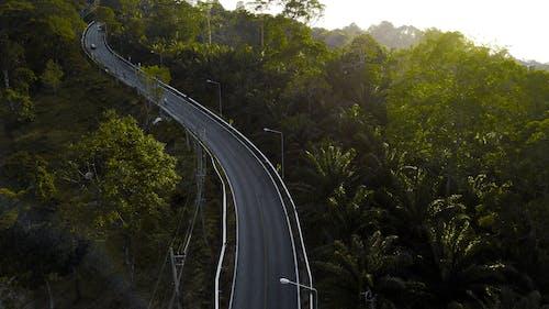 Základová fotografie zdarma na téma palmy, Thajsko
