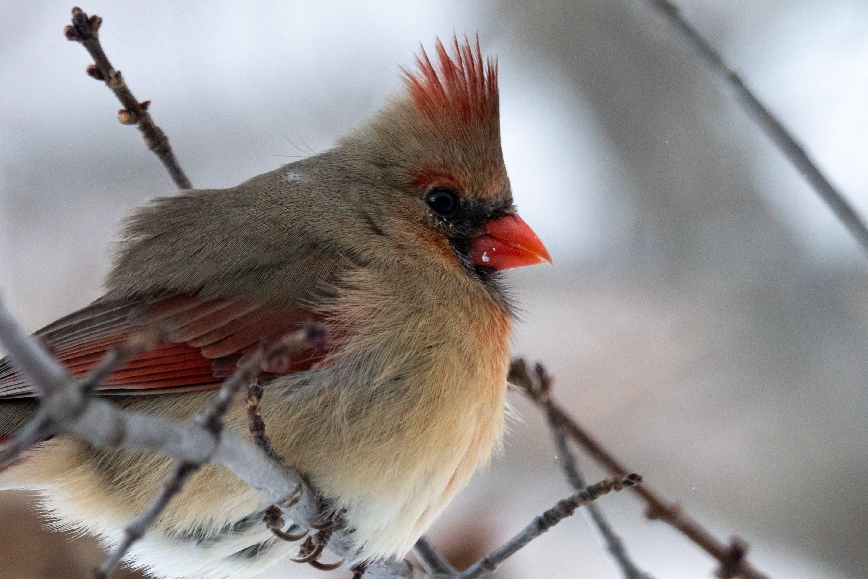 겨울, 깃털, 들새 관찰, 새 모이통의 무료 스톡 사진