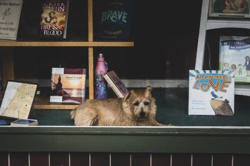 Free stock photo of books, canine, dog, people watching