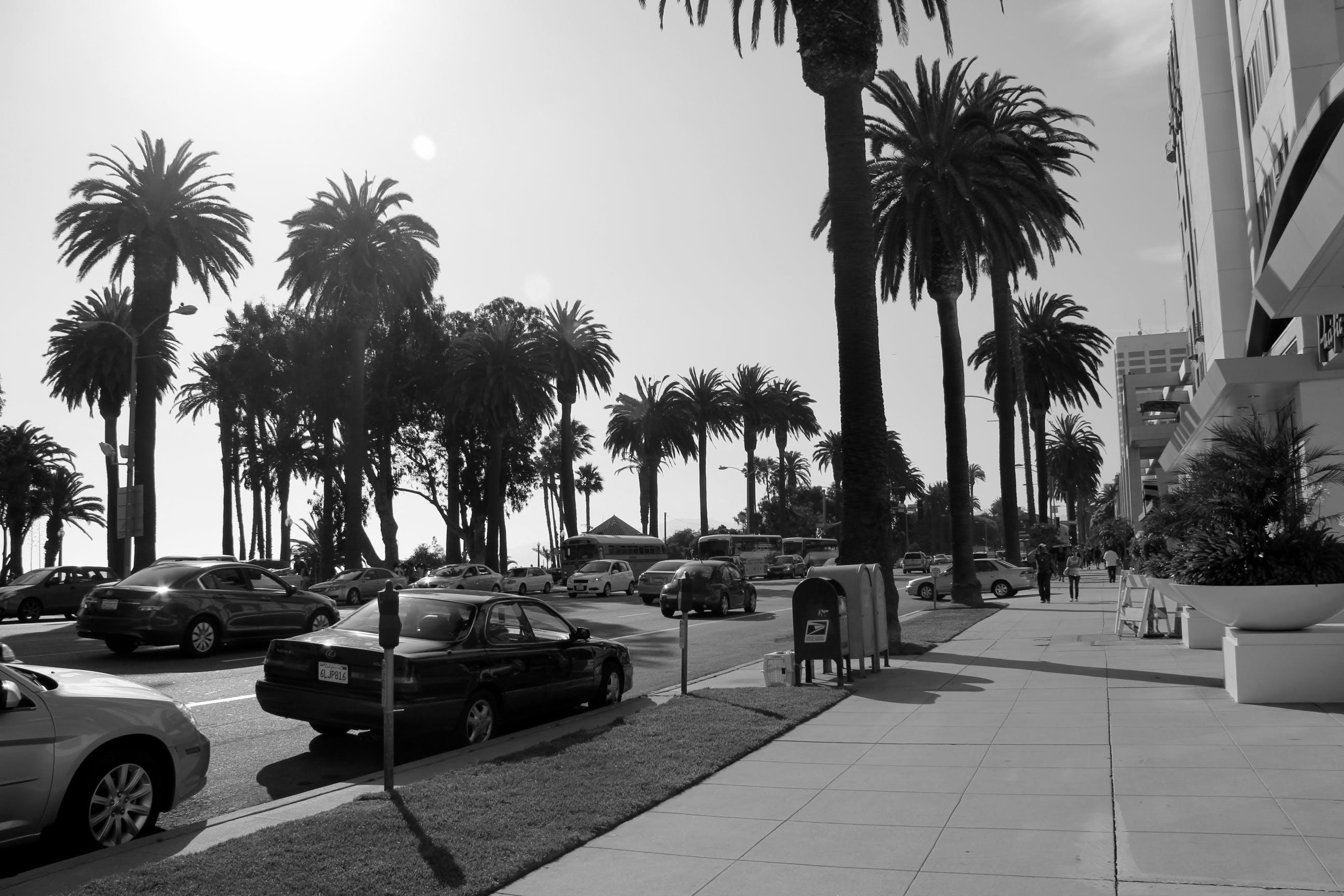 Ảnh lưu trữ miễn phí về ánh sáng ban ngày, bờ biển, cây, du lịch