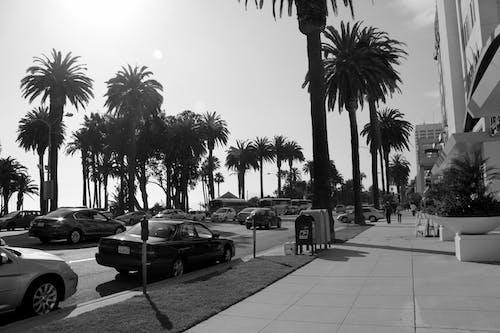Immagine gratuita di alberi, auto, divertimento, estate