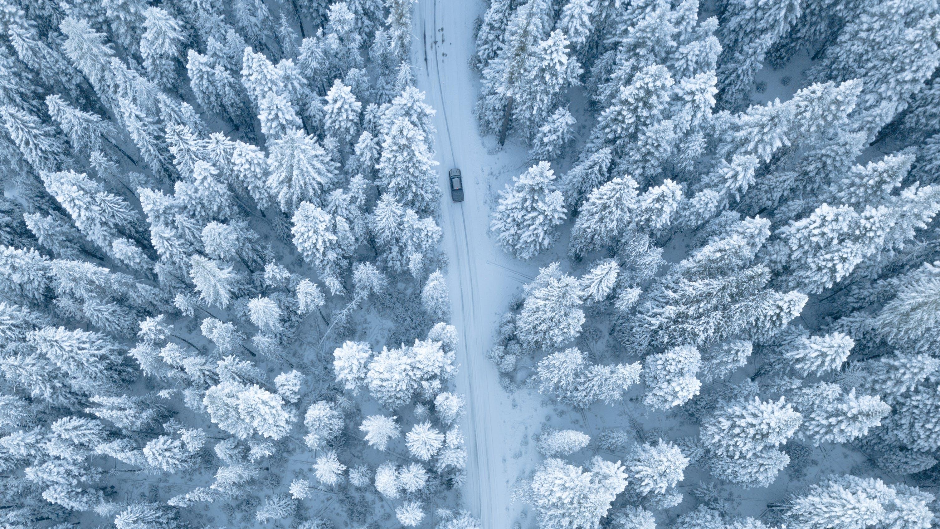 bäume, eisig, frost