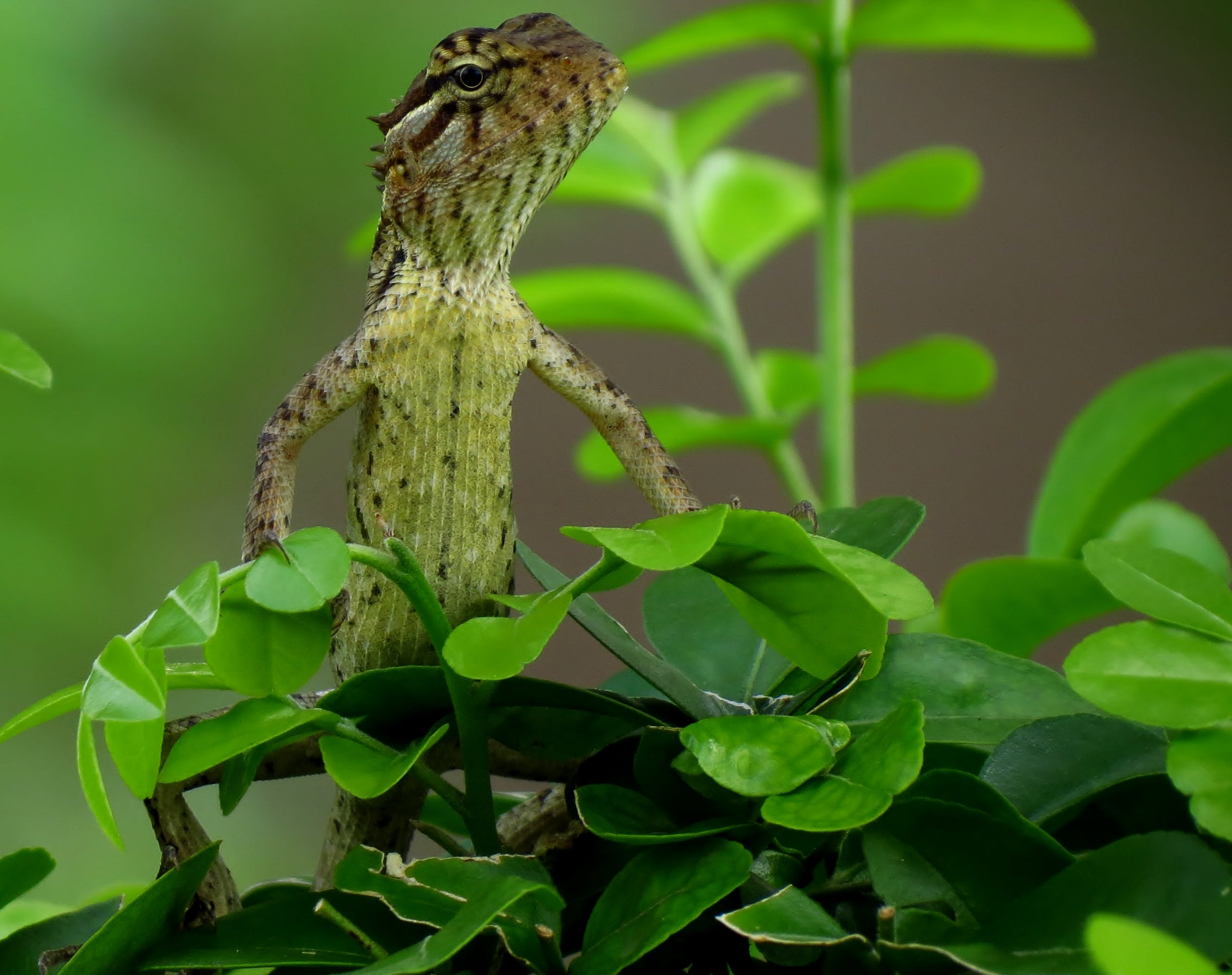Close-up Photography of Gray Lizard Standing on Green Leafed Plant