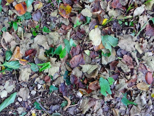 Free stock photo of dried leaves