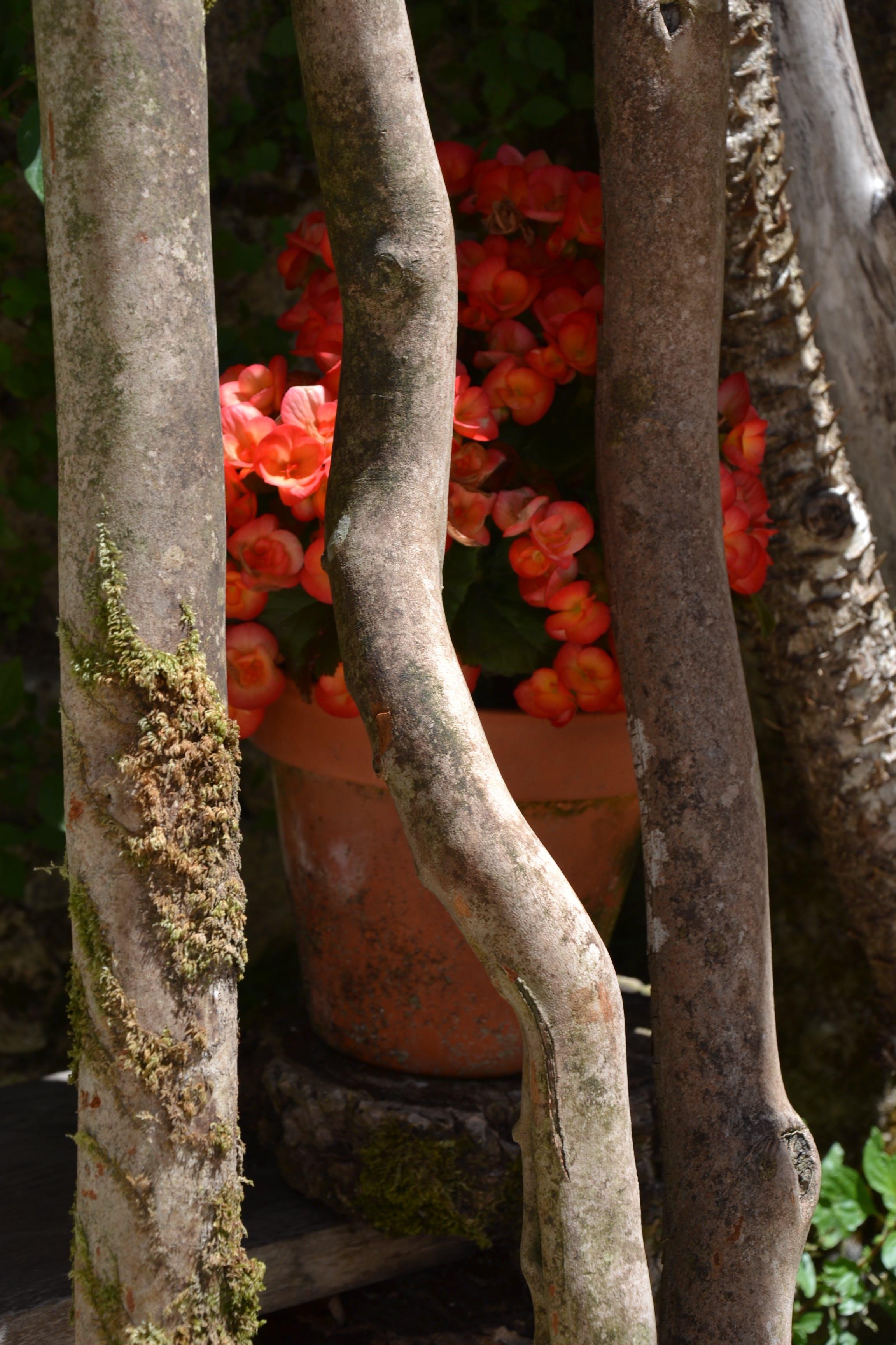 Free stock photo of art, flower, sticks, wood