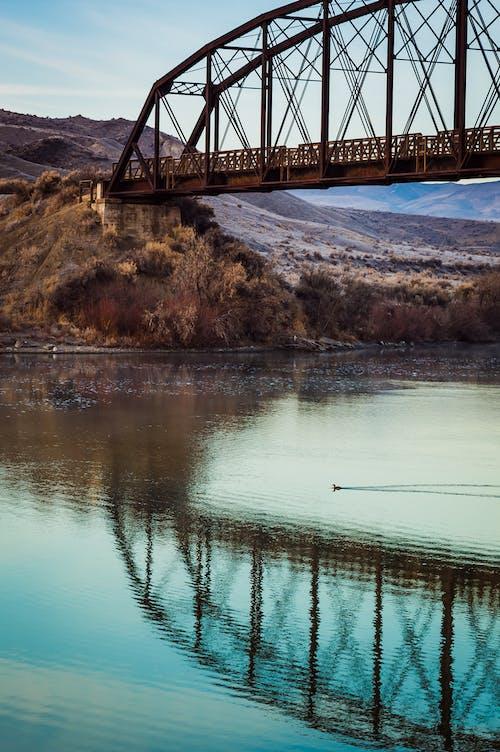 反射, 基礎設施, 橋 的 免费素材照片