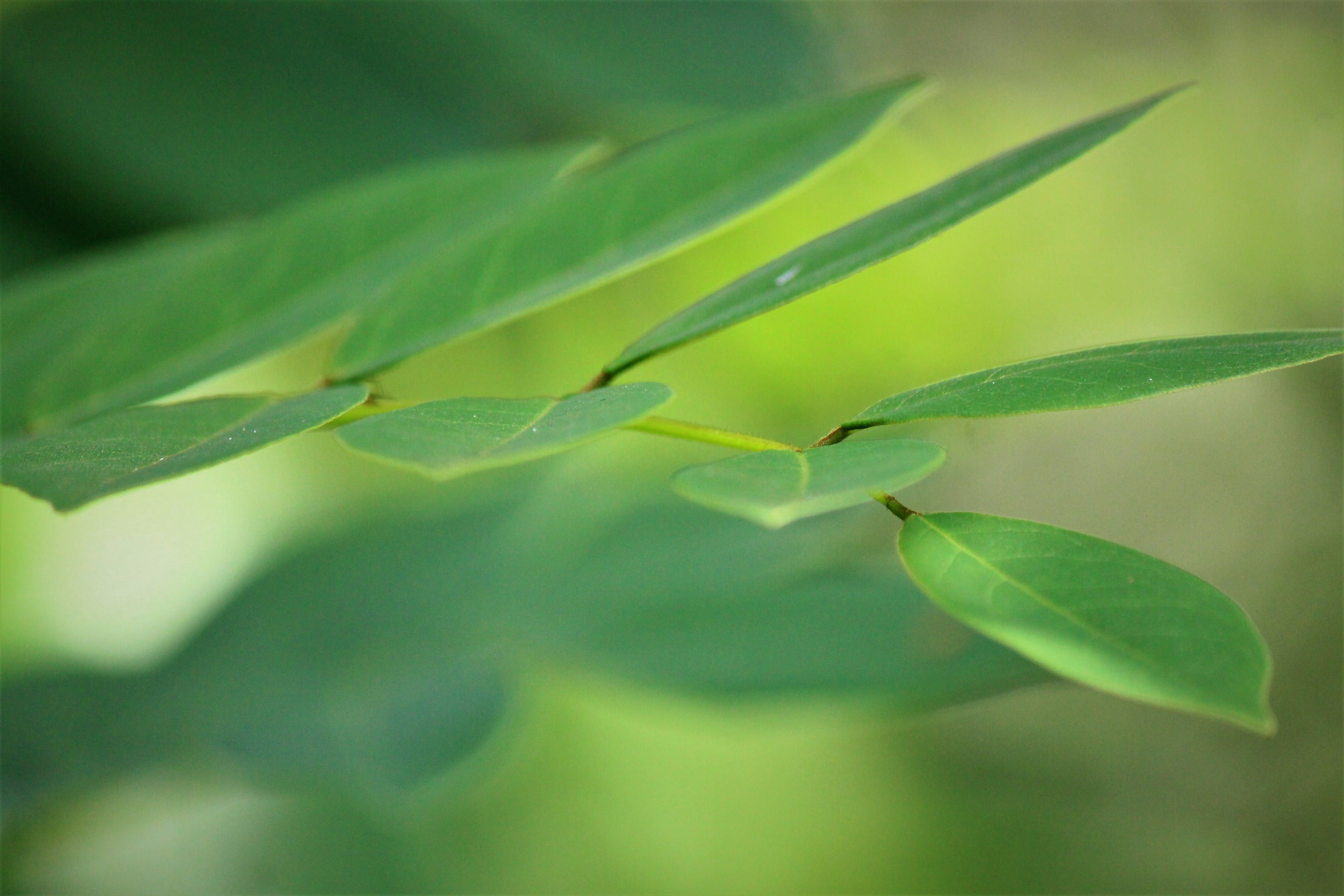 Free stock photo of close up, grass, natural