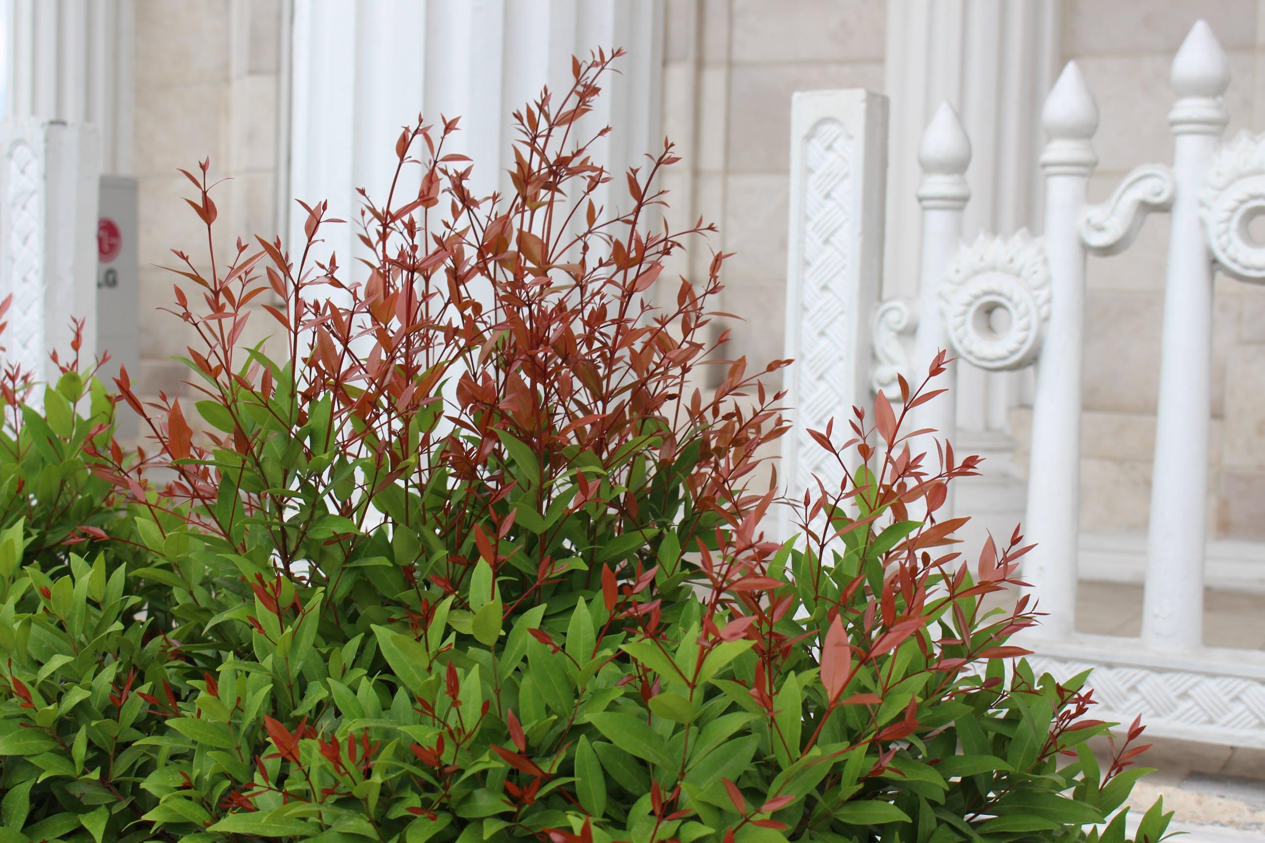 Foto d'estoc gratuïta de fons blanc, fulles verdes, herba, planta