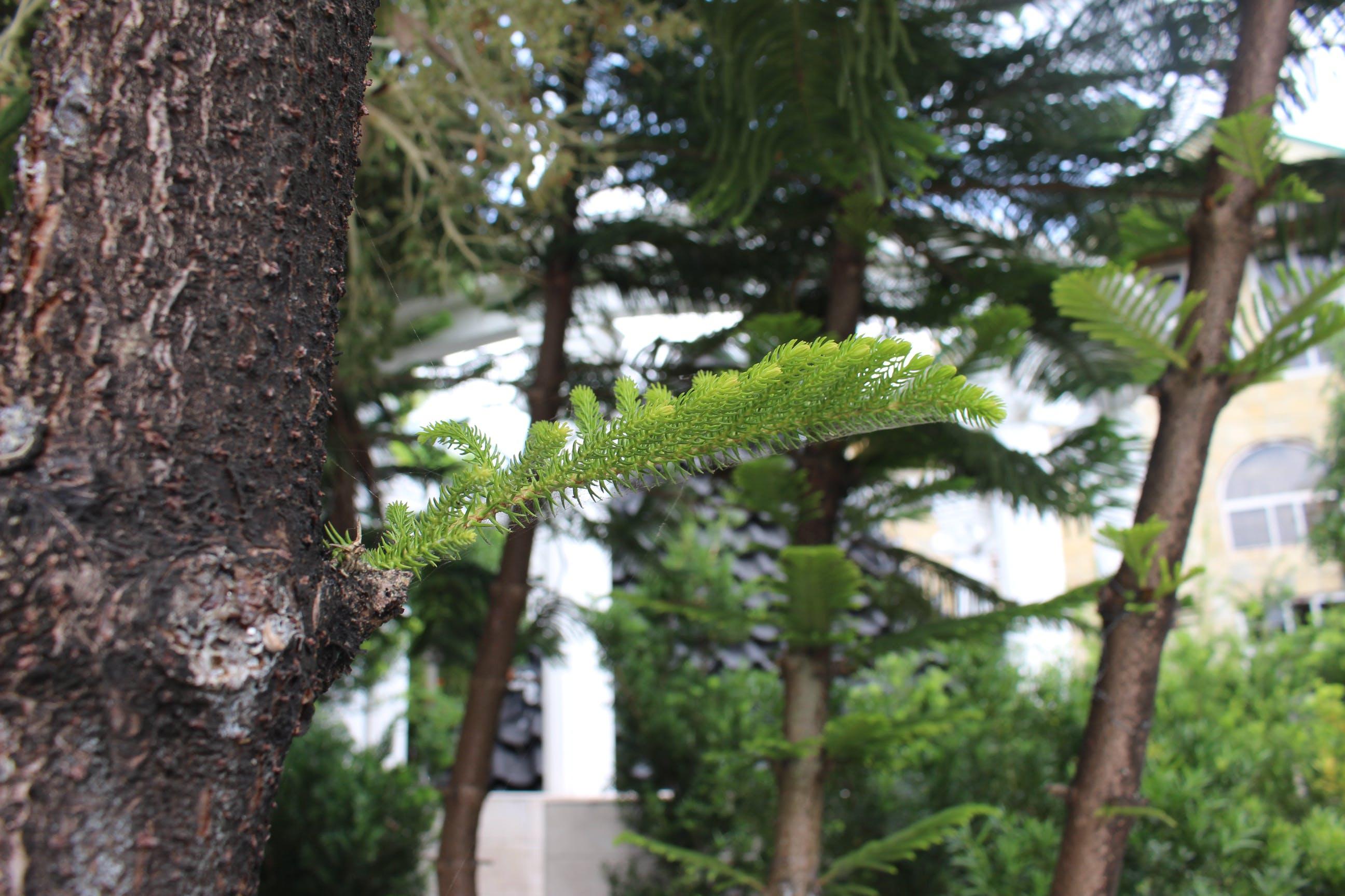 Foto d'estoc gratuïta de arbres