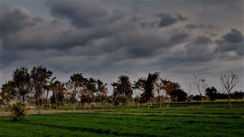 Imagine de stoc gratuită din arbori, curmale, după ploaie, nori întunecați