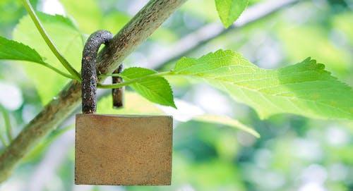 Základová fotografie zdarma na téma léto, větev, zámek, zelená