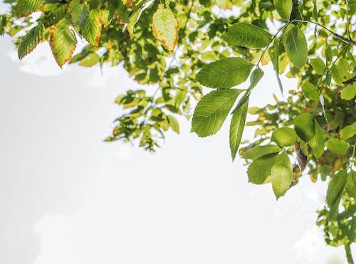 Foto d'estoc gratuïta de arbre, branca, estiu, planta