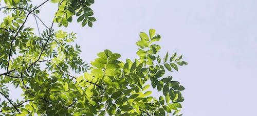 Foto d'estoc gratuïta de arbre, blau, cel, estiu