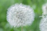 plant, white, flower