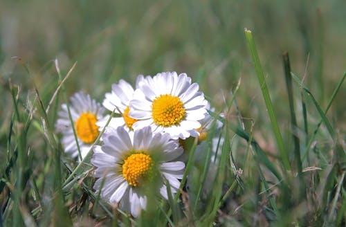 Безкоштовне стокове фото на тему «білий, зелений, квітка, літо»