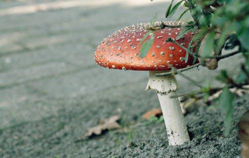 Základová fotografie zdarma na téma houby, rostlina, závod