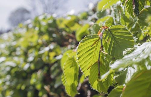 Základová fotografie zdarma na téma příroda, rostlina, závod, živý plot