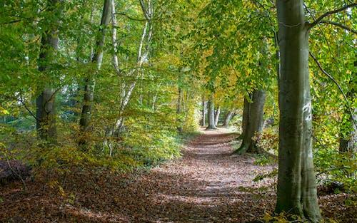 Základová fotografie zdarma na téma krajina, lehký, les, příroda