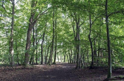 Základová fotografie zdarma na téma cesta, krajina, les, příroda