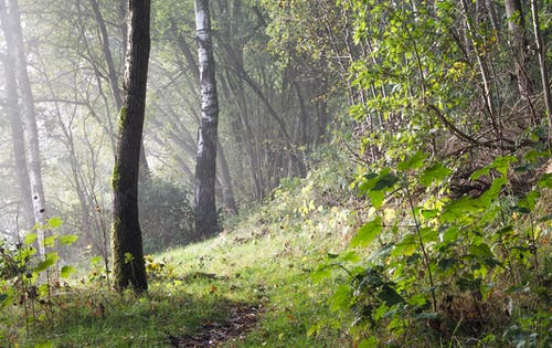 Základová fotografie zdarma na téma krajina, les, mlha, moře