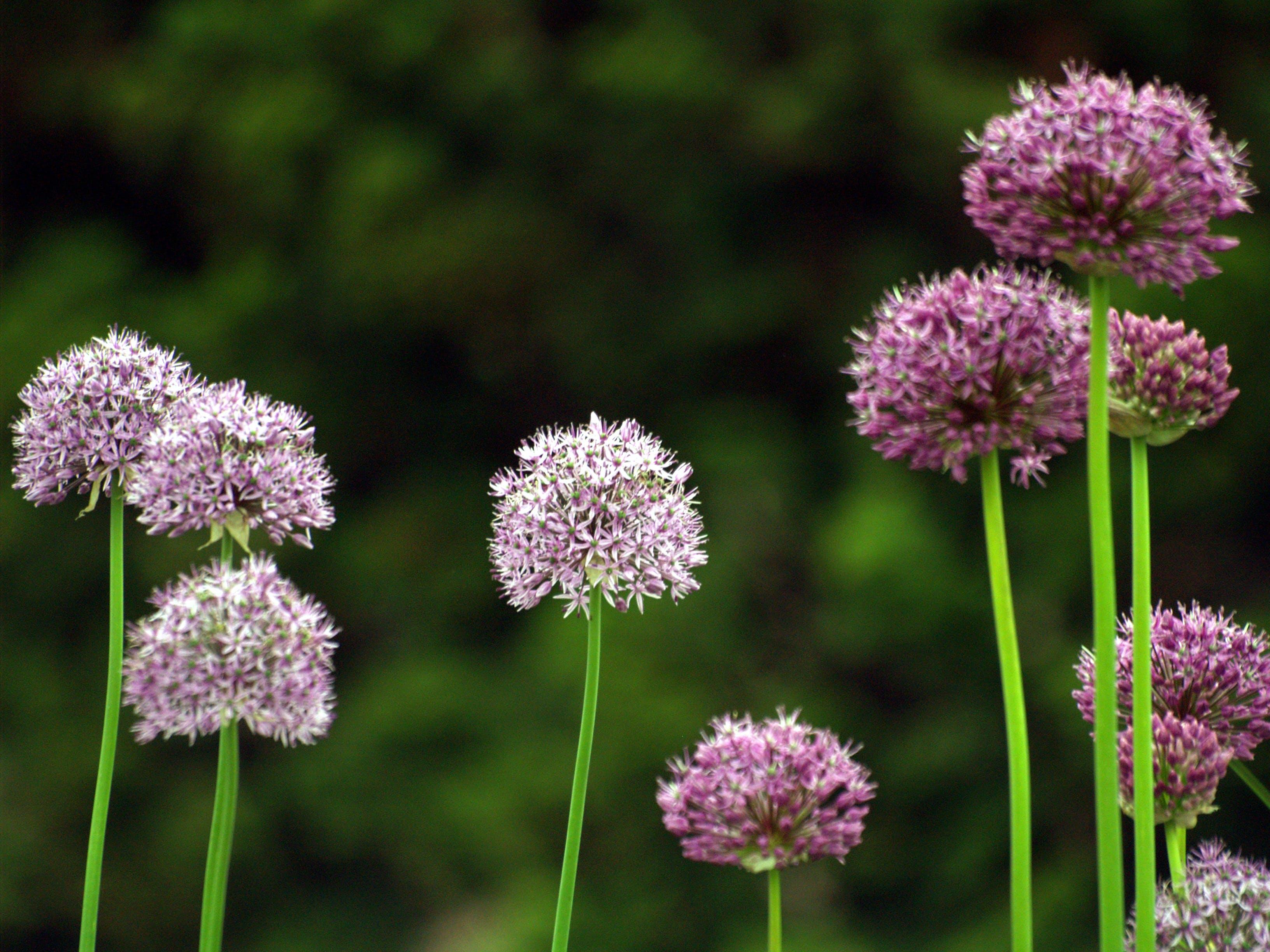 Free stock photo of flowers, flowers field