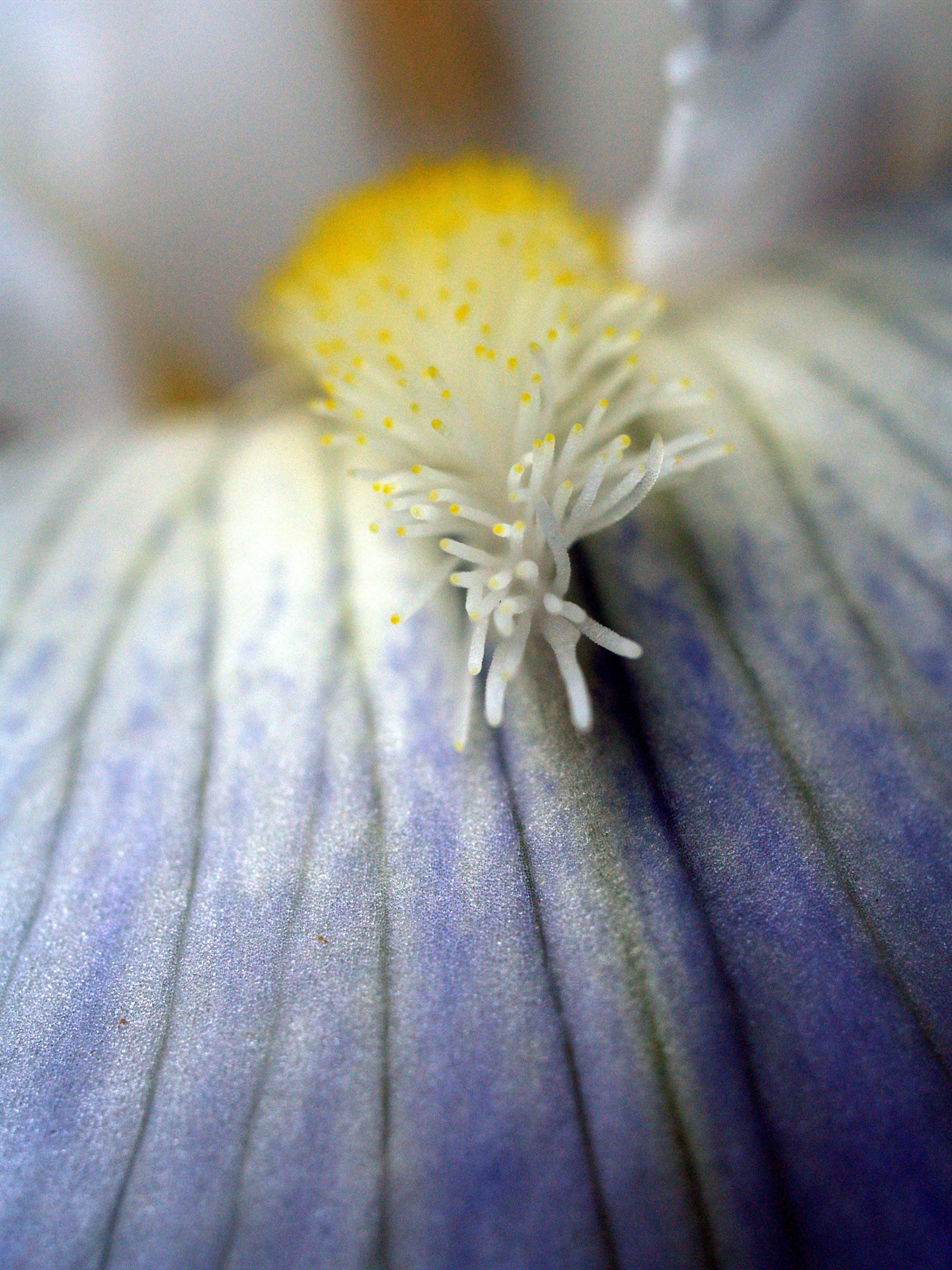 Free stock photo of close up, flower, macro
