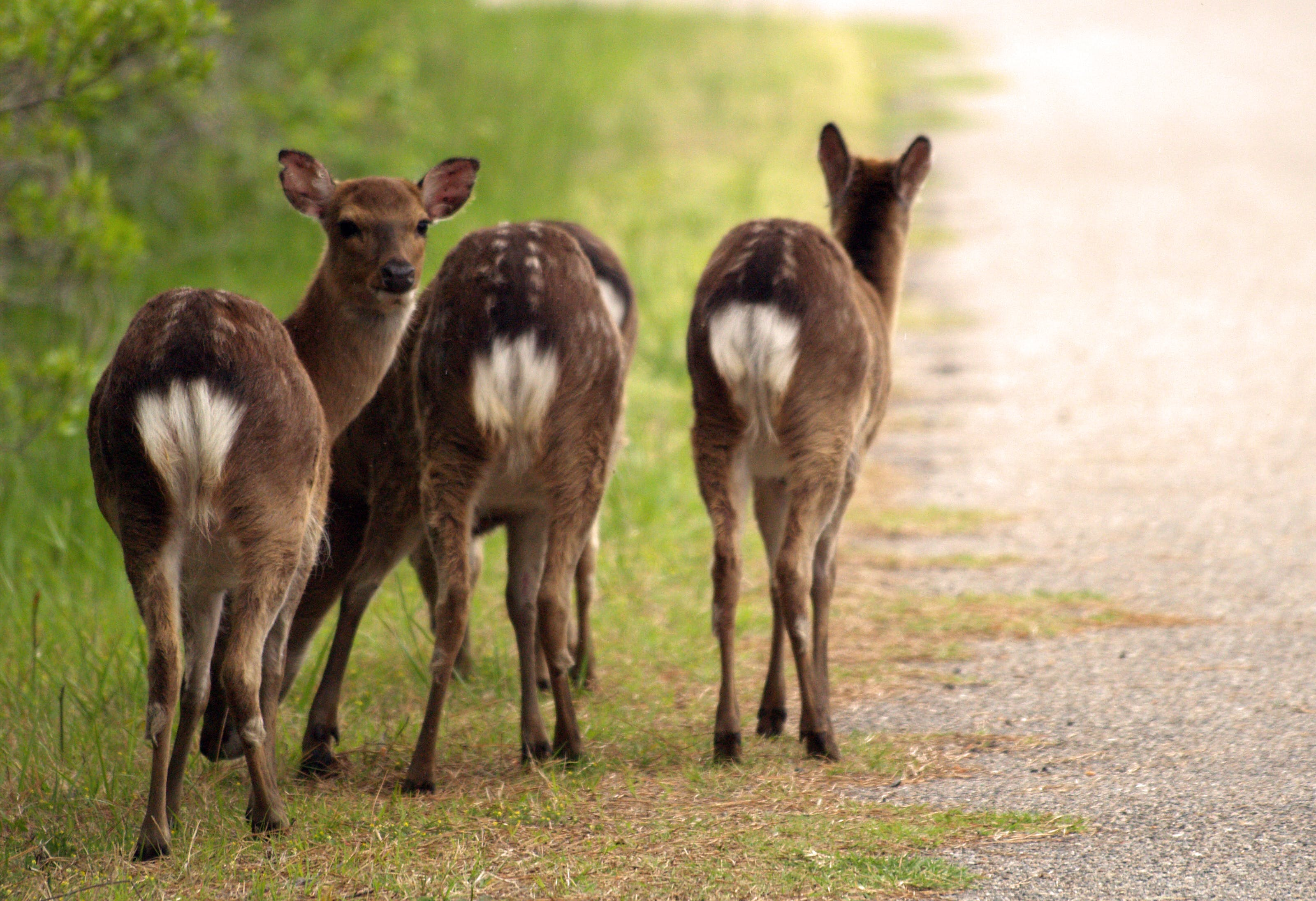 Free stock photo of animals, deer, nature