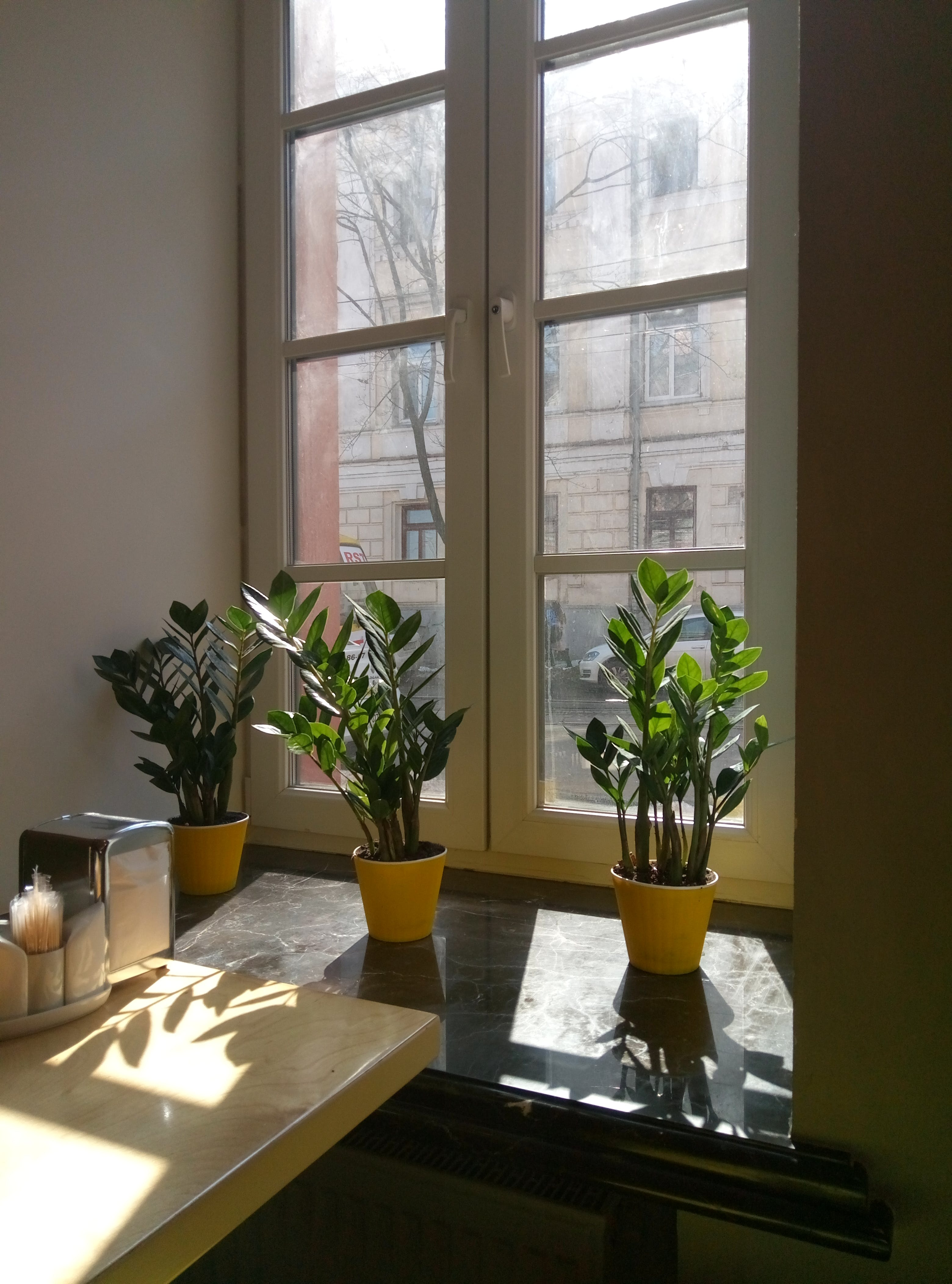 Green Potted Plants Near Closed Window