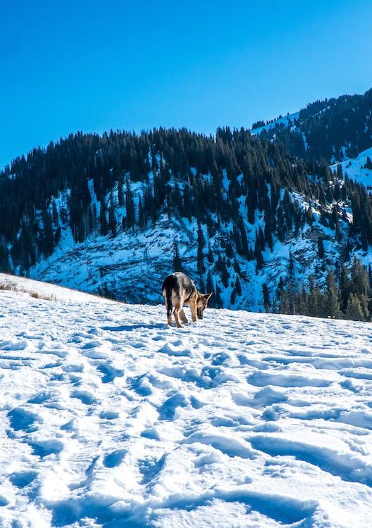 altitude, bergen, besneeuwd