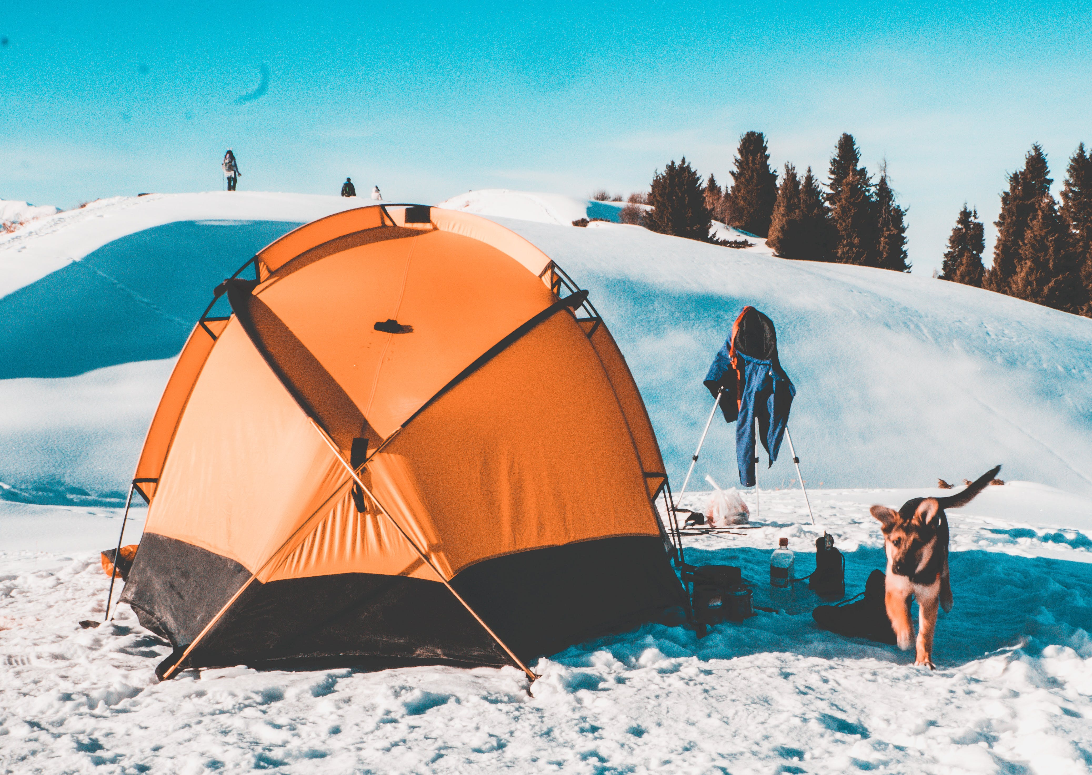 Free stock photo of dog, gsd, snow, tent