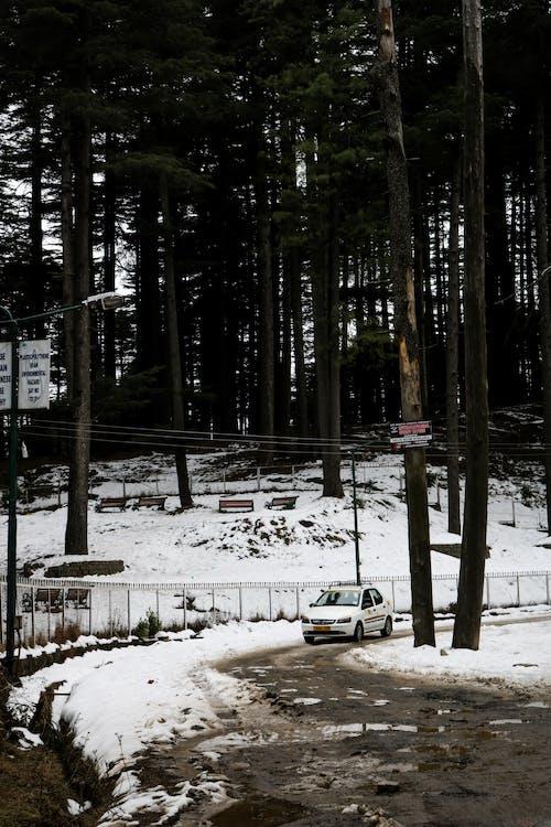 Kostnadsfri bild av bergen, hillstation, höga träd, skog