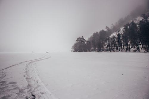Бесплатное стоковое фото с белый, зима, красивый, природа