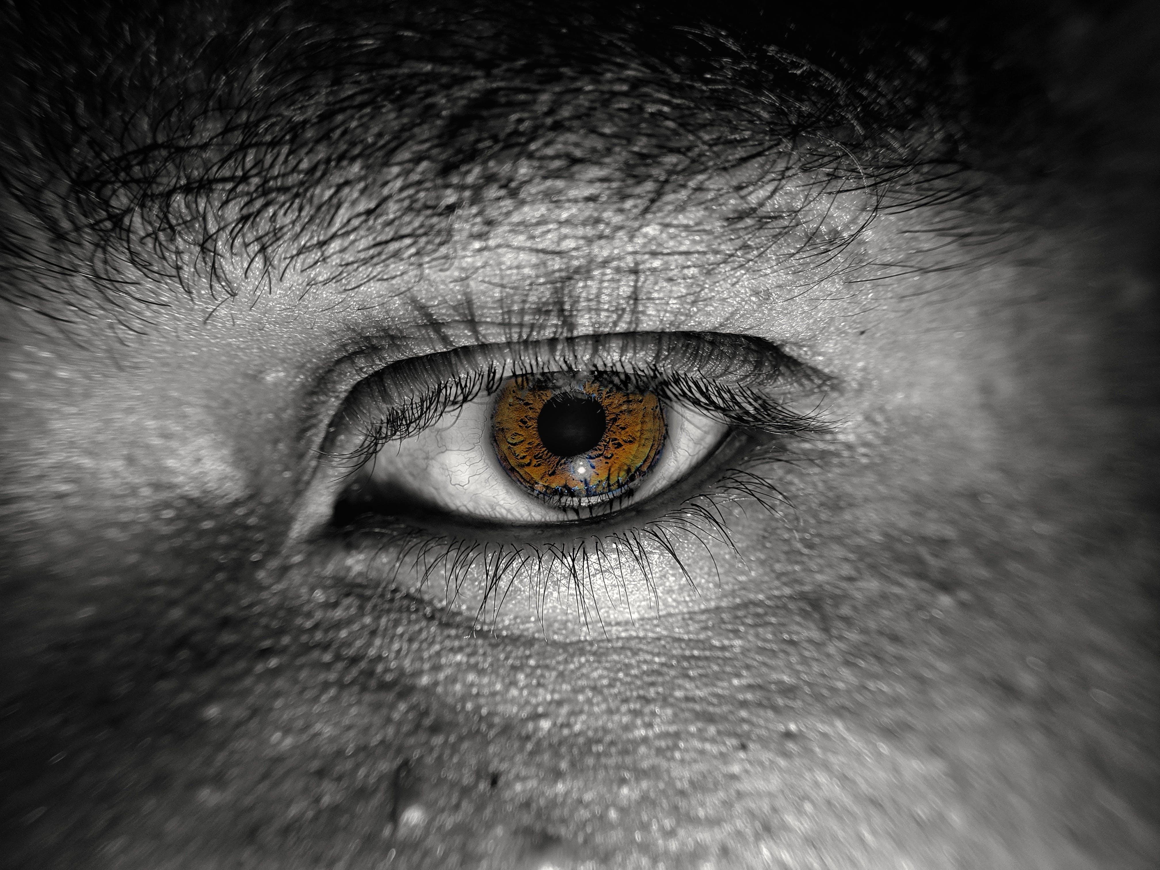 Gratis lagerfoto af 4k-baggrund, brune øjne, smukke øjne, sort og hvid