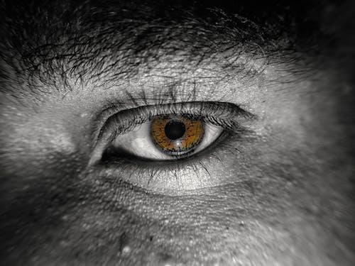 Fotobanka sbezplatnými fotkami na tému 4k tapety, čierna a biela, hnedé oči, krásne oči