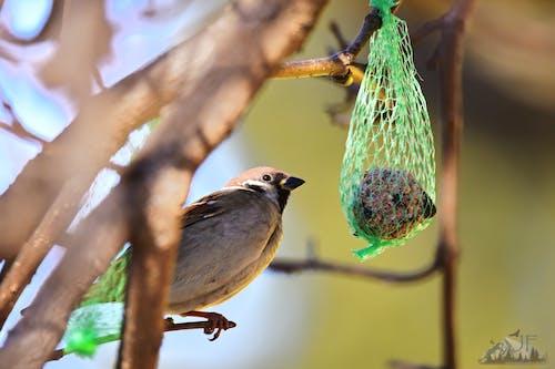Foto d'estoc gratuïta de arbres, arbust, avifauna, bellesa a la natura