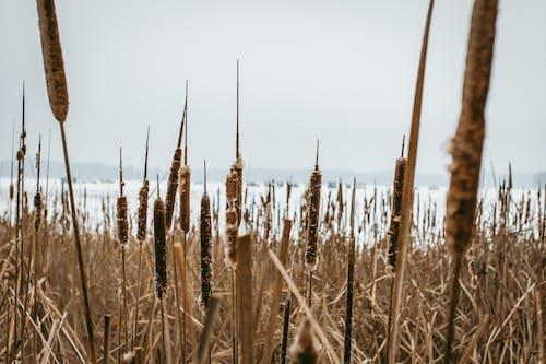 Kostenloses Stock Foto zu grasland, landschaft, natur, röhricht