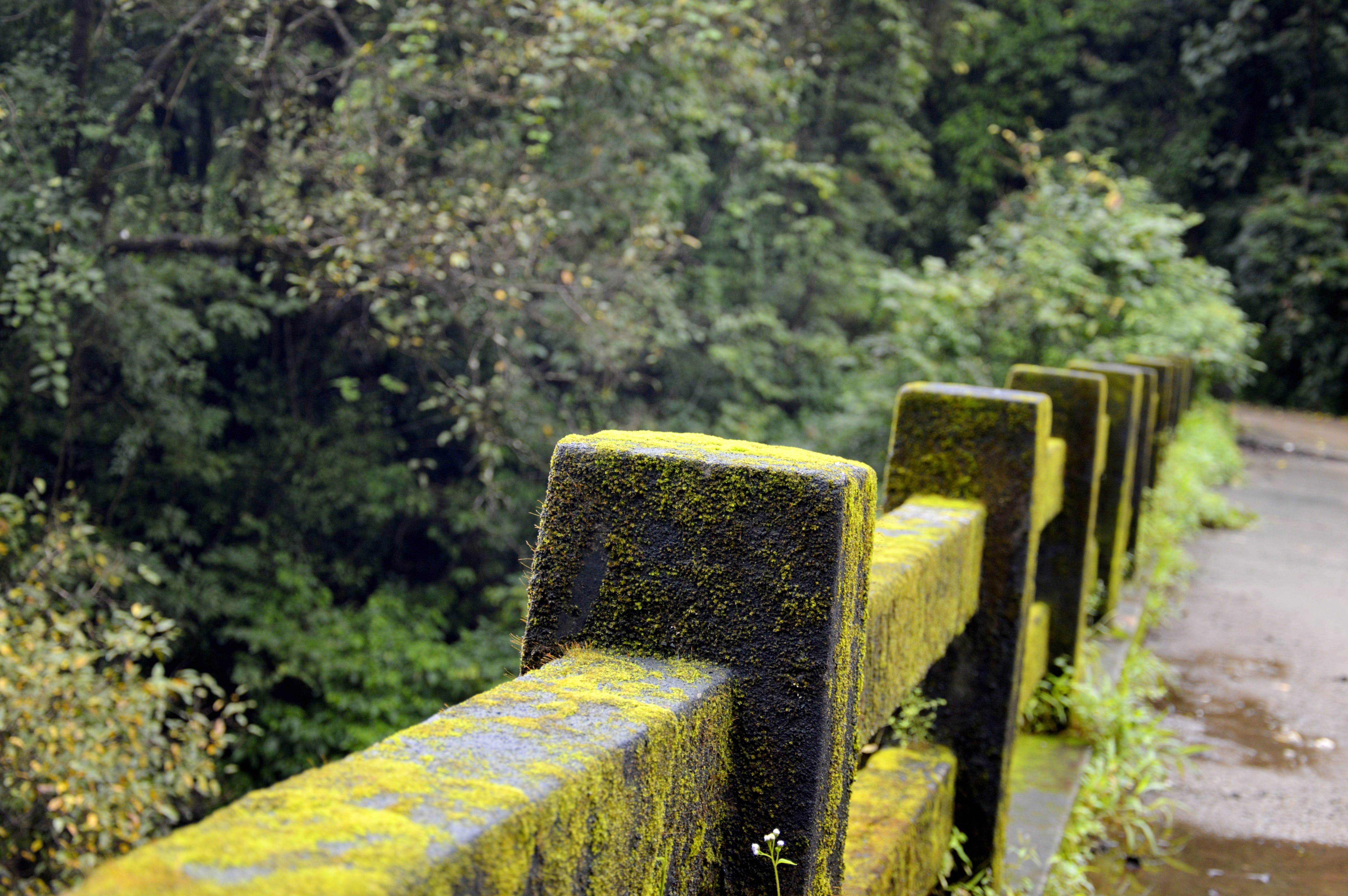 Concrete Fence With Green Moss Near Green Tree