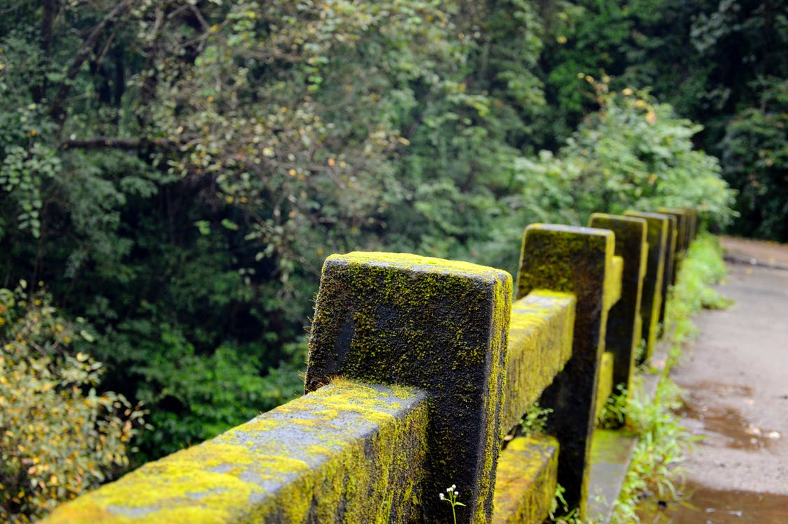 alan derinliği, beton korkuluklar, bitki örtüsü