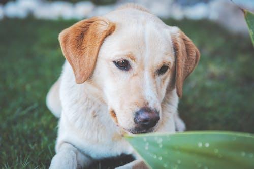갈색 개, 개, 동물, 반려동물의 무료 스톡 사진