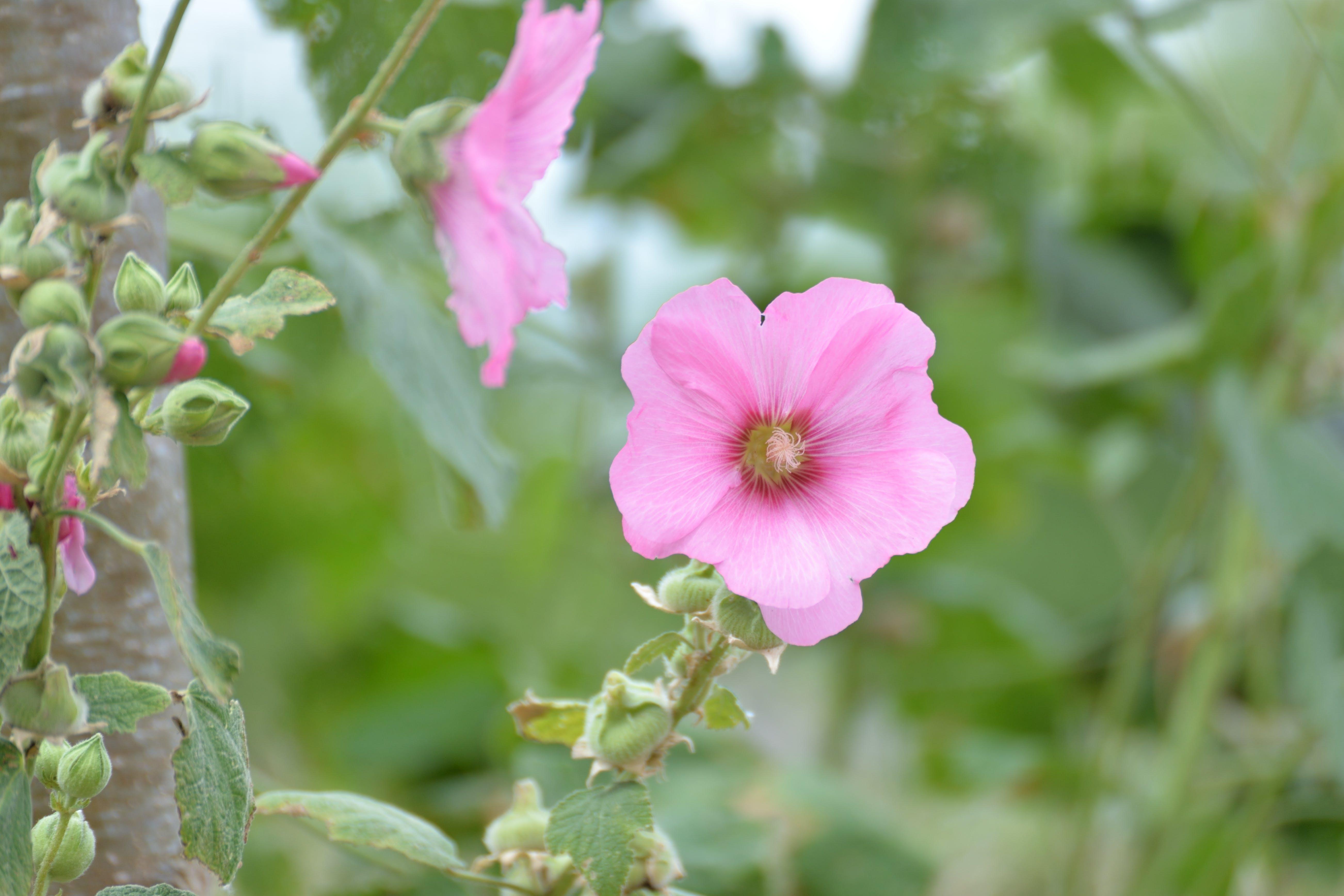 Free stock photo of botanique, comestible, fleur, Flore