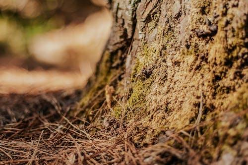 eart, 吠, 太陽, 松樹 的 免费素材照片
