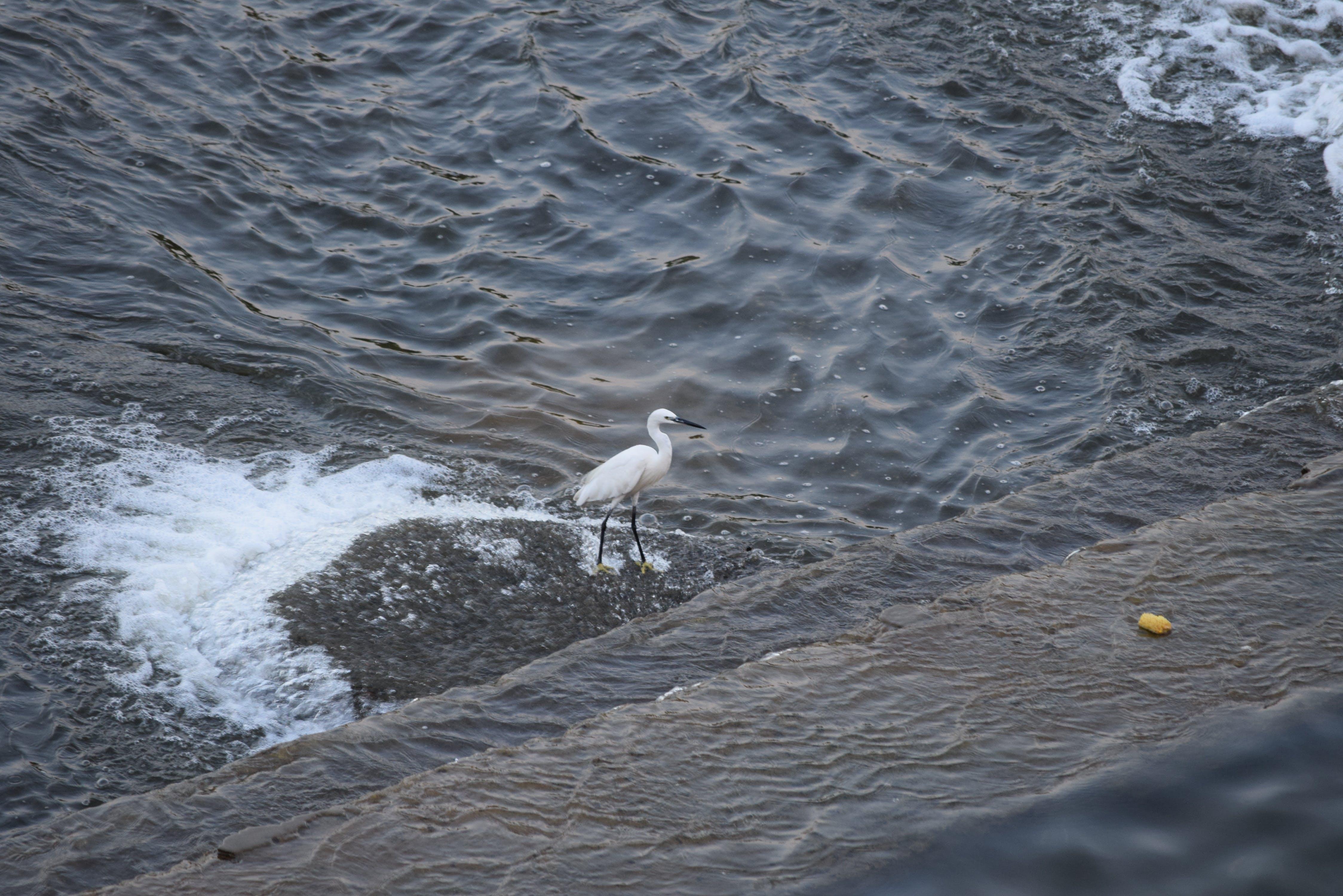 Free stock photo of bird, india