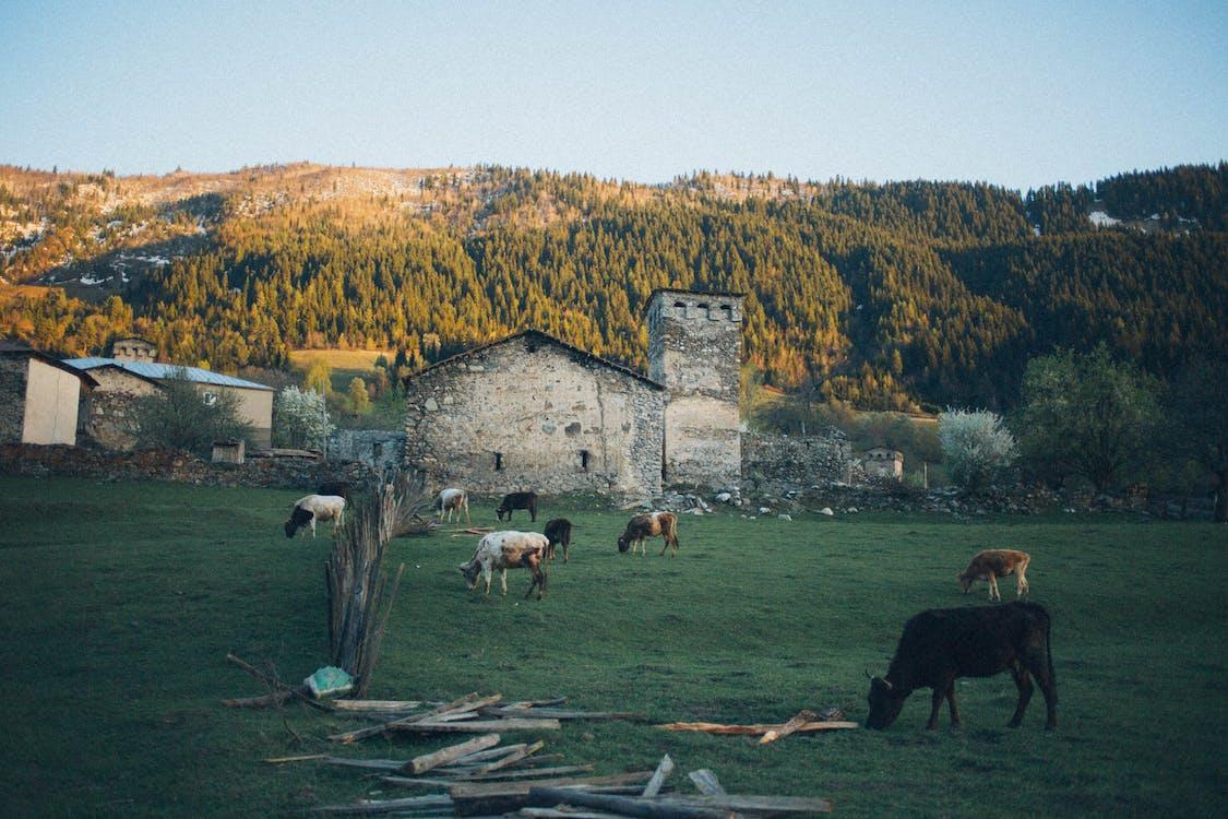 animales, campo, campos de cultivo
