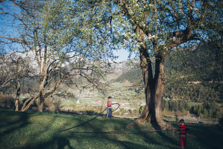 Ingyenes stockfotó ág, fa, fiúk, gyerekek témában