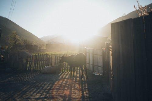 Gratis lagerfoto af bjerge, dagslys, himmel, køer