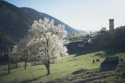 Gratis stockfoto met akkerland, architectuur, berg, bomen